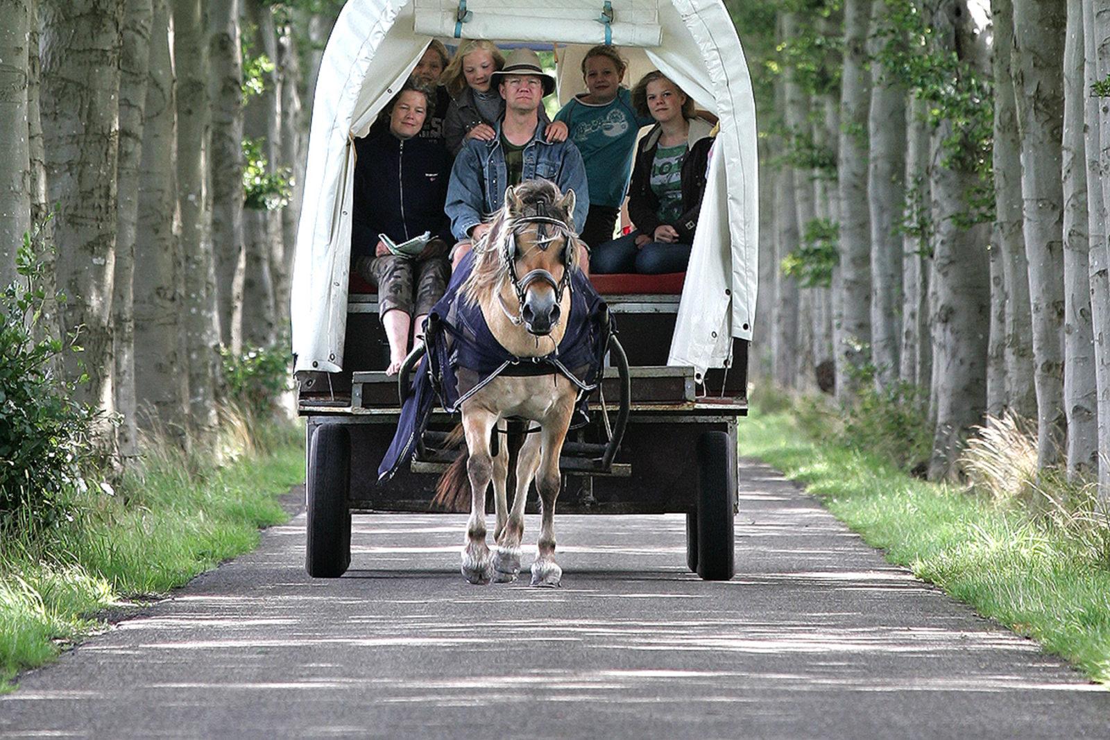 huifkar-camping-rotandorp-drenthe-friesland